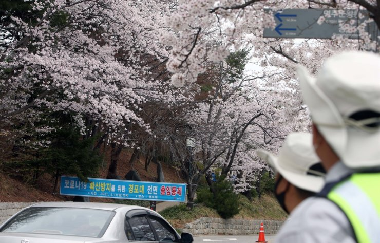 A hilly sightseeing track rich with cherry blossoms near Gyeongpo Lake in Gangneung, Gangwon Province, on April 3 is blocked by a poster that notifies it has been closed to prevent the spread of COVID-19. Yonhap