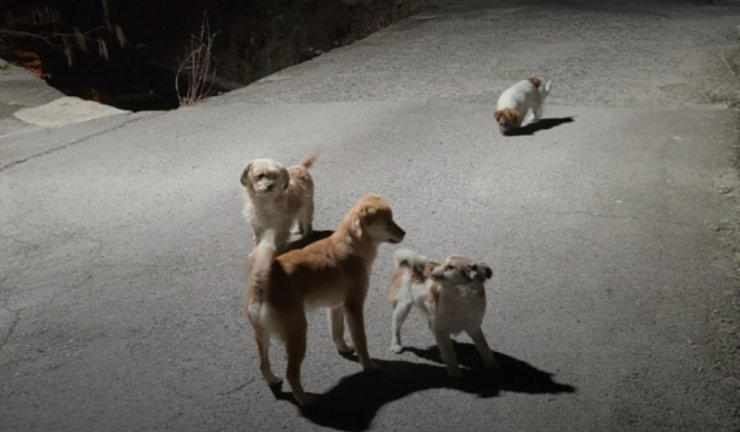This photo shows four homeless dogs that were rescued by the Korean Animal Welfare Association in Chagwon, South Gyeongsang Province, in February. Courtesy of Korean Animal Welfare Association