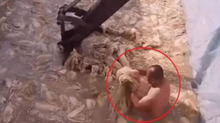 In this screenshot of a Weibo video from March 29, a man who appears to be naked wades in a pool of cabbage and grabs some of the vegetables soaked in a murky liquid while an excavator stirs them at a kimchi factory in China. Korea Times file
