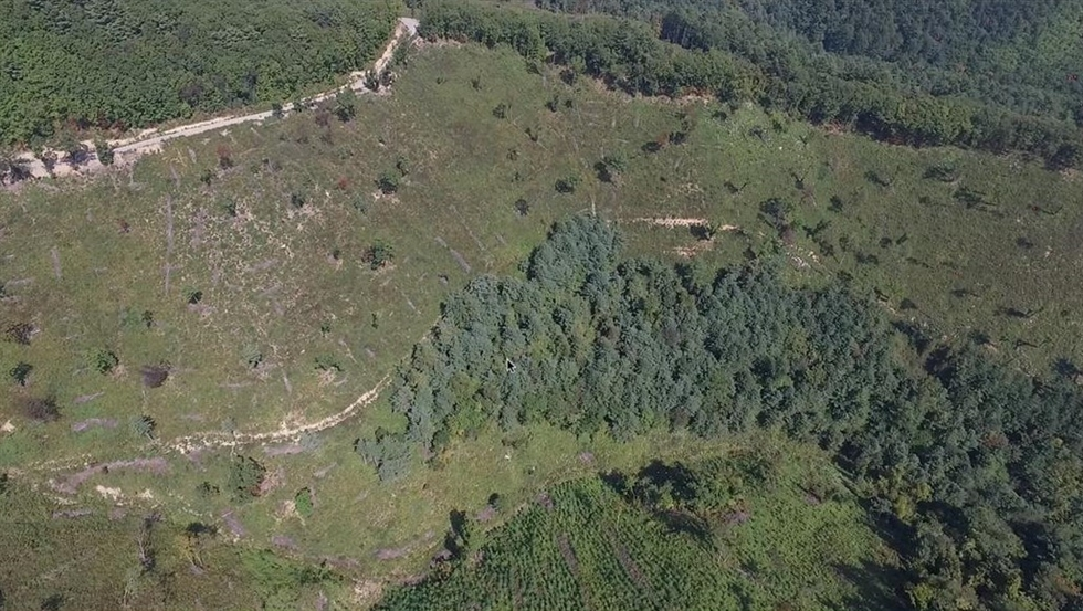 In this May 6, 2020, file photo, trees are felled at the top of a mountain behind Indong Community Office in Gumi, North Gyeongsang Province. The trees were cut down even before the district office launched an official business plan as to what to do with the land, according to a report by the Hankook Ilbo, sister paper of The Korea Times. Korea Times file