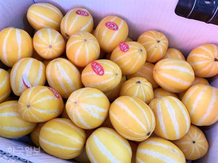 Oriental melons produced in Seongju / Korea Times file