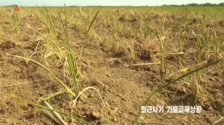 In this frame grab from video released by North Korea's Korean Central Television on July 16, crops are suffering from drought. Yonhap