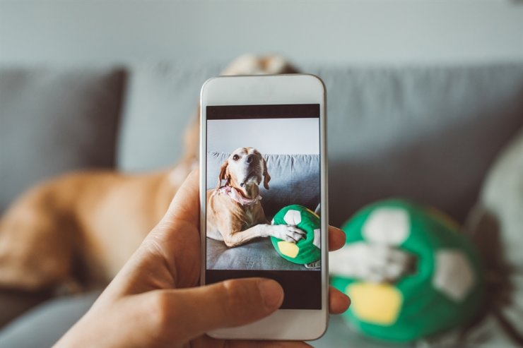 Pet sitters send photos of their clients' pets to the owners to let them know their pets are fine. gettyimagesbank