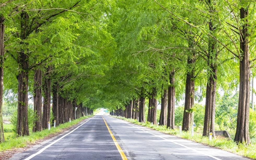 Baeksu Coastal Road in Yeonggwang, South Jeolla Province / Courtesy of HotelsCombined