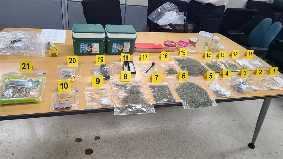 Seen are three of 13 cannabis plants that were being raised at a daycare center by the son of the center's operator. The Korea Coast Guard said, Monday, they arrested five people, including the son, for growing, selling and using the cannabis. Courtesy of Korea Coast Guard