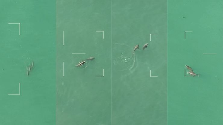 The screenshots from the video show porpoises mating behavior in the sea off the coast of Taean, South Chungcheong Province. The video, which was filmed in April, was released Sept. 3. Courtesy of Ministry of Environment