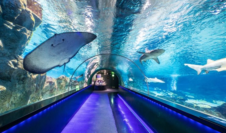 InterContinental Seoul COEX presents its 'Go Aquarium' package, designed to satisfy family guests. Courtesy of InterContinental Seoul COEX