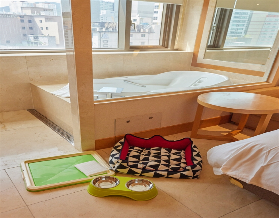 Booking.com introduces six pet-friendly stays in Korea where travelers can enjoy a vacation with their beloved animals more comfortably. Traveling with companion animals has become more popular as pet ownership increases. gettyimagesbank