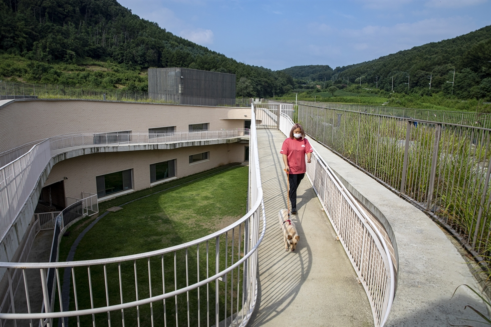Canine residents of The Bom Center, an animal shelter in Paju, Gyeonggi Province, run by KARA, run around in the central garden, Sept. 9. Korea Times photo by Shim Hyun-chul