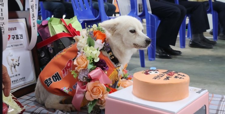 Baekgu sits in front of its new house during a ceremony to appoint it as an honorary rescue dog by South Chungcheong Province, Sept. 6. Yonhap