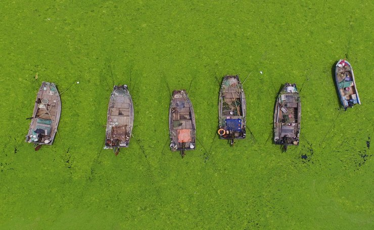 <span>This photo taken on July 11, 2019 shows boats surrounded by algae in a bay in Qingdao, China's eastern Shandong province. - The bright green algae bloom is an annual phenomenon along the Shandong coastline since the first outbreak in 2008, and is believed to be caused by a combination of warming sea temperatures, and edible seaweed farming off the coast. AFP</span><br /><br />