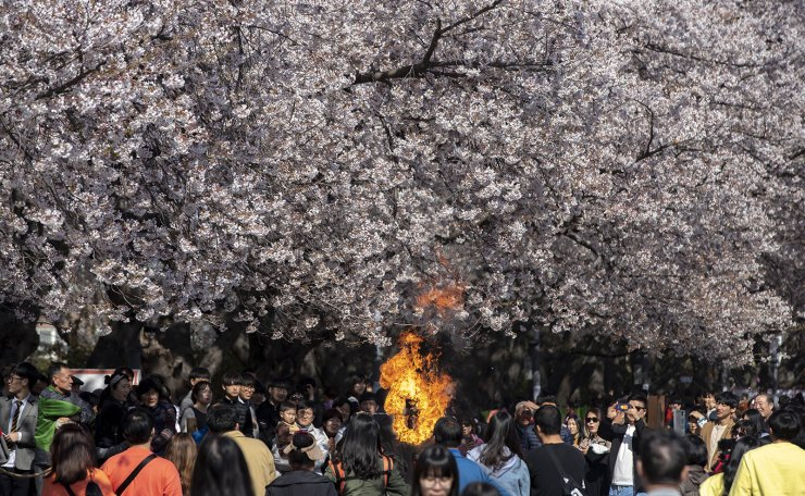 People flock to the site of the Jinhae Cherry Blossom Festival, Wednesday. Korea Times photo by Shim Hyun-chul