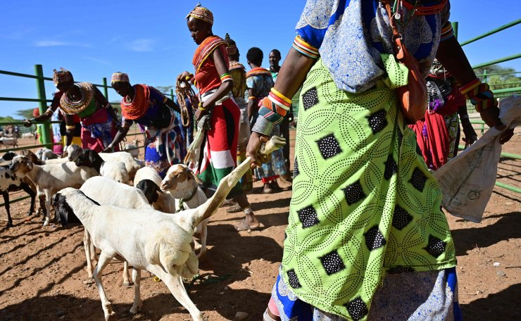 Traditional Samburu tribeswomen gather their goats to be sell at Merille livestock market, some 411km north of Nairobi in Kenya's Marsabit county, on April 30, 2019. AFP