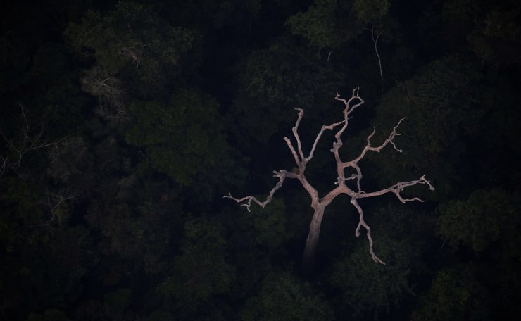 An aerial view of the Amazon near Porto Velho, Rondonia State, Brazil, Brazil August 21, 2019. Reuters