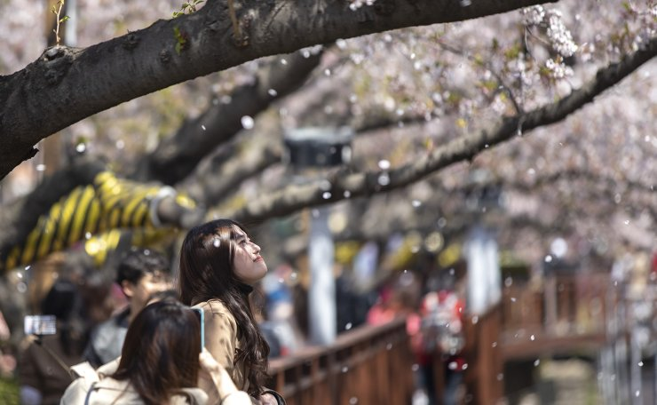People enjoy the cherry blossoms in Changwon, South Gyeongsang Province, Wednesday. The Jinhae Cherry Blossom Festival, the nation's largest for the flower, continues through April 10. Korea Times photo by Shim Hyun-chul