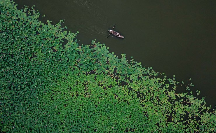 Aerial photo taken on July 22, 2019 shows the scenery of a lotus pond in Nanpingzhuang Village of Luanzhou City, north China's Hebei Province. Xinhua