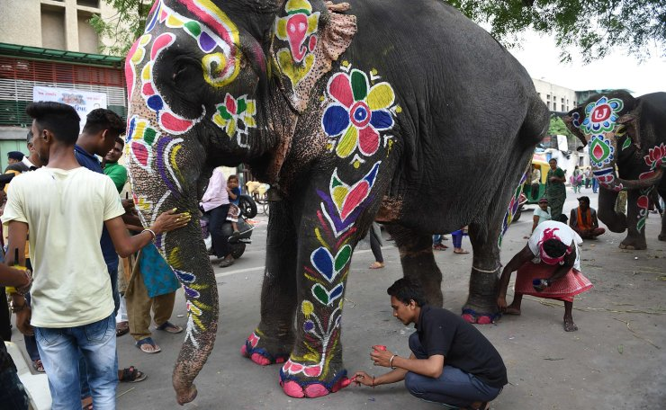 An Indian elephant is painted ahead of the annual Hindu festival Rath Yatra in Ahmedabad on July 3, 2019. - Rath Yatra, an annual Hindu festival, is scheduled to start on July 4 this year and will be led by some 15 elephants. Many temples in India, including the Jagannath temple in Ahmedabad holding the Rath Yatra, traditionally parade decorated elephants at Hindu festivals. Animal rights activists want the practice banned. AFP