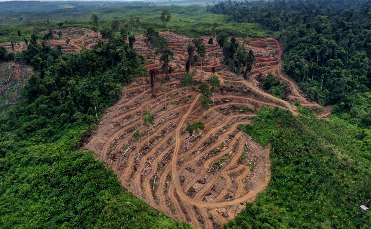 A photograph taken with a drone shows areas of forest that have been cleared for oil palm plantations, in Bawa village, Subulusalam, Aceh, Indonesia, 27 July 2019 (issued 29 July 2019). EPA