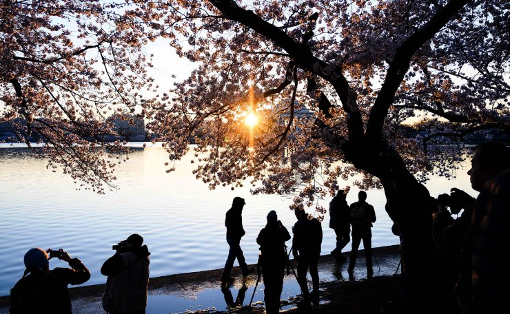 People watch the sun rise under cherry blossom trees  on the Tidal Basin in Washington, DC on April 3, 2019. AFP