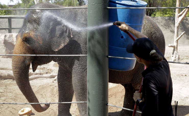 Elephant keeper Monica Uhl cools off 'Reba', an Asian elephant at the Phoenix Zoo, Tuesday, July 16, 2019, in Phoenix. Forecasters are predicting that the temperature on Tuesday could hit a scorching high of 115 degrees. The Phoenix Zoo use spraying, frozen treats and shaded area's to keep their animals cool. AP