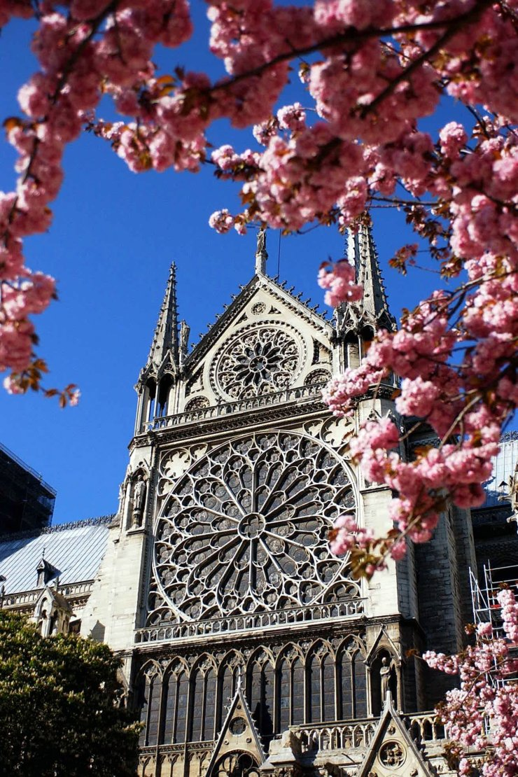 File photo taken on April 7, 2003 shows cherry blossoms near the Notre Dame Cathedral in Paris, France. The devastating fire at Notre Dame Cathedral in central Paris has been put out after burning for 15 hours, local media reported on April 16, 2019. Xinhua
