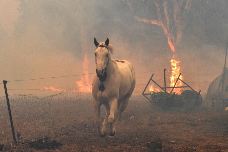 A horse trying to move away from nearby bushfires at a residential property near the town of Nowra in the Australian state of New South Wales, Dec. 31, 2019. AFP