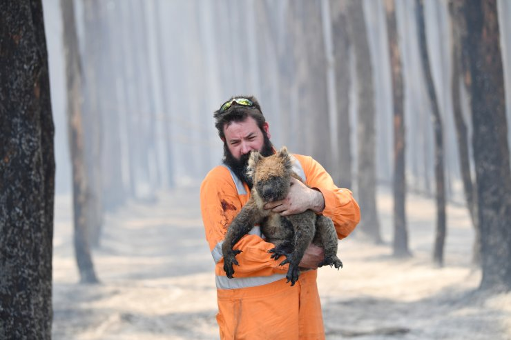 Adelaide wildlife rescuer Simon Adamczyk holds a koala he rescued at a burning forest near Cape Borda on Kangaroo Island, Australia, Jan. 7, 2020. A convoy of Army vehicles, transporting up to 100 Army Reservists and self-sustainment supplies, is on Kangaroo Island as part of Operation Bushfire Assist at the request of the South Australian Government. EPA