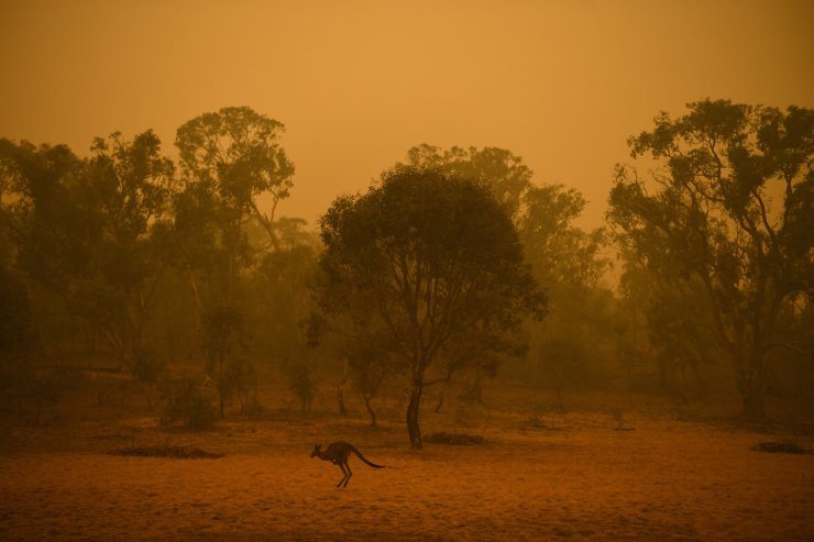A kangaroo is seen in bushland surrounded by smoke haze early morning in Canberra, Australia, Jan. 5, 2020. EPA