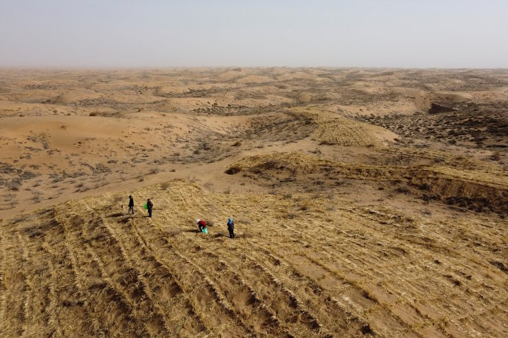 Wang Tianchang, 78, and his family walk through square grids of grass and bushes planted by hand to prevent sand movement, a practice known as 'holding down the sand', while planting  Huabang, a yellow flowering bush known as the 'sweetvetch', on the edge of the Gobi desert on the outskirts of Wuwei, Gansu province, China, April 15, 2021. Picture taken with a drone. Tree-planting has been at the heart of China's environmental efforts for decades as the country seeks to turn barren deserts and marshes near its borders into farmland. The flowering bush known as the sweetvetch has an 80% success rate even in harsh desert conditions and has become a key part of efforts to 'hold down the sand'. REUTERS