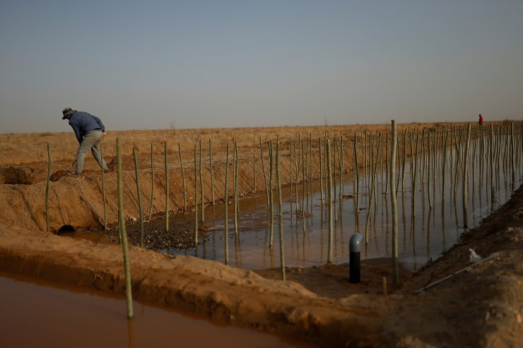 A worker shovels soil next to irrigation channels and recently planted shoots of Xinjiang poplar at the Yangguan state-backed forest farm, on the edge of the Gobi desert on the outskirts of Dunhuang, Gansu province, China, April 13, 2021. The Yangguan project, designed to repair the region's overworked ecosystem, has proven controversial. In March, a government investigation team found Yangguan had violated regulations by allowing vineyards to be planted in protected forest. Villagers were also accused of illegally felling trees. REUTERS