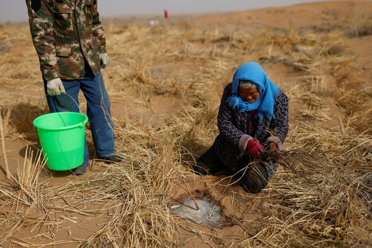 Li Lanying plants a shoot of Huabang, a yellow flowering bush known as the 'sweetvetch', while her son Wang Yinji holds a bucket of water on the edge of the Gobi desert, on the outskirts of Wuwei, Gansu province, China, April 15, 2021. 'The more the forest expands, the more it eats into the sands, the better it is for us,' said Yinji, who has taken over much of the backbreaking farming and planting while his father recovers from illness. REUTERS