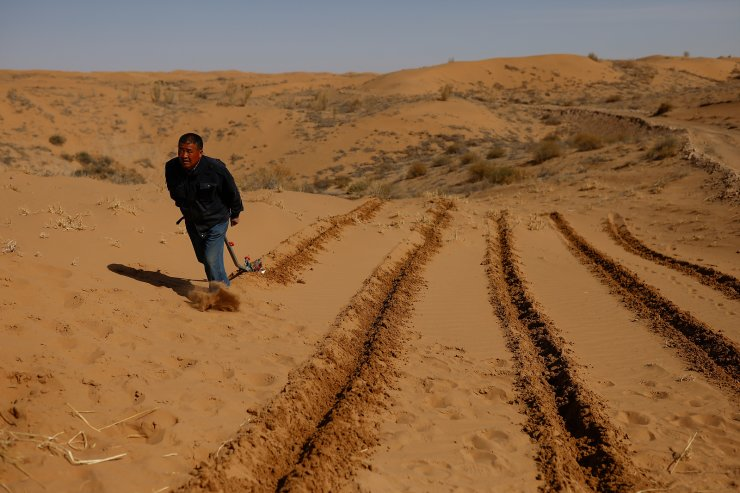 Wang Yinji, 53, plows the ground before planting straw to prevent sand movement, a practice known as 'holding down the sand', during a voluntary tree-planting event organised by Yinji's family, on the edge of the Gobi desert on the outskirts of Wuwei, Gansu province, China, April 16, 2021. 'The more the forest expands, the more it eats into the sands, the better it is for us,' said Yinji. REUTERS