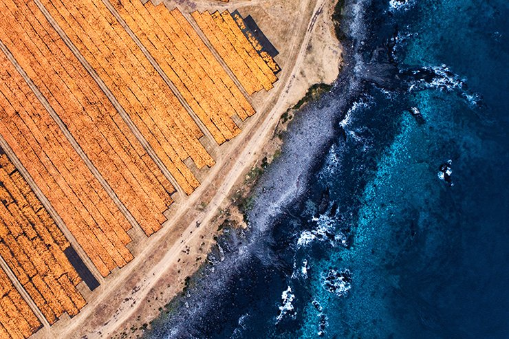 This aerial shot shows tangerine peels being dried near the ocean in Jeju's Seogwipo City. Cows graze in the pasture during spring, summer and fall and the area turns into orange color with tangerine peels being dried in winter. Dried tangerine peels are dried again with hot air and then are ground into powder to be used for skincare products, herbal medicine and feed for dairy cows. Courtest of Choi Jae-young