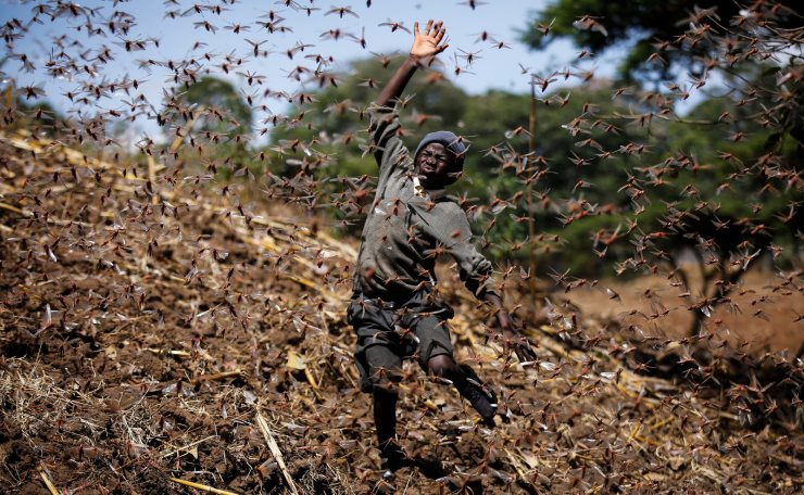 Stephen Mudoga, 12, the son of a farmer, chases away a swarm of locusts on his farm as he returns home from school, at Elburgon, in Nakuru county, Kenya Wednesday, March 17, 2021. It's the beginning of the planting season in Kenya, but delayed rains have brought a small amount of optimism in the fight against the locusts, which pose an unprecedented risk to agriculture-based livelihoods and food security in the already fragile Horn of Africa region, as without rainfall the swarms will not breed. AP