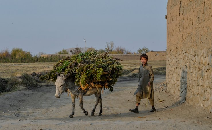 In this photograph taken on November 25, 2019, a child looks on as he walks with a donkey after returing to his village following four years of fighting between Afghan security forces and IS group in Achin district of Nangarhar province. - Afghan farmer Gulnar Malik had seen her share of hardships as war ravaged her country over four decades -- but nothing prepared the mother of five for the arrival of the Islamic State group. AFP