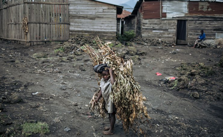A child brings branches home to Sake, northeastern Democratic Republic of Congo, on September 28, 2019. AFP