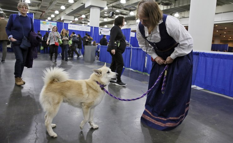Ghost, a Norwegian buhund, and his Patricia owner Faye Adcox greet visitors at the American Kennel Club's