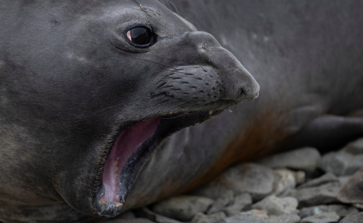 A seal reacts on Snow Island, Antarctica, January 30, 2020. Reuters