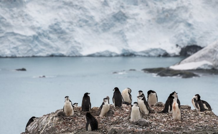 A handout photo made available by Greenpeace shows a group of chinstrap penguins on Elephant Island, Antarctica 11 February 2020. EPA