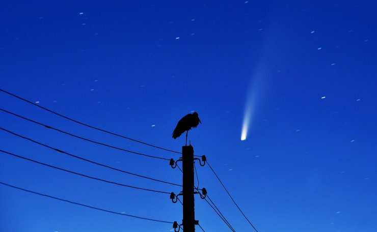 A stork stands on a power lines pillar as the comet C/2020 F3 (NEOWISE) is seen in the sky above the village of Kreva, some 100 km northwest of Minsk, early on July 13, 2020. AFP