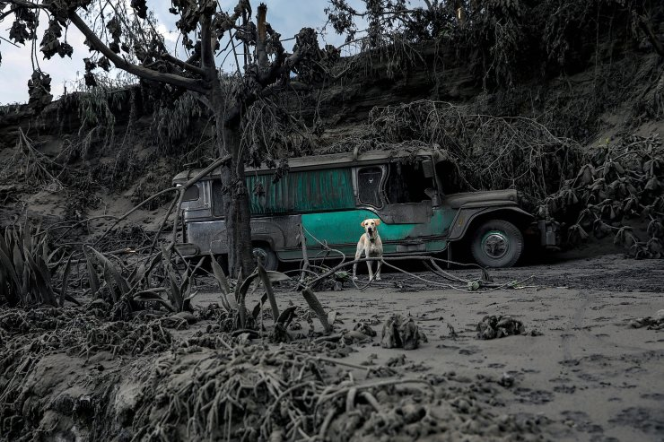 A dog, left in a garage covered with ashes, barks nearby the erupting Taal Volcano in Talisay, Batangas, Philippines, January 13, 2020. REUTERS/Eloisa Lopez