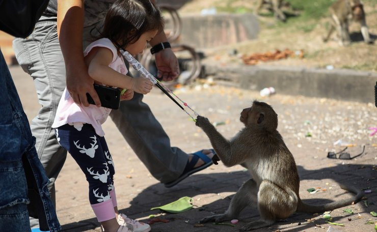 A monkey attempts to take hold of a girl's face mask in front of the Prang Sam Yod temple during the annual Monkey Buffet Festival in Lopburi province, north of Bangkok on November 29, 2020. AFP