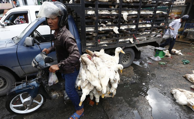 A man transports ducks at a market in Phnom Penh, Cambodia, 09 February 2021. The Ministry of Health has issued guidelines urging the public to increase awareness in food safety to prevent bird flu in the lead up to Chinese Lunar New Year. EPA