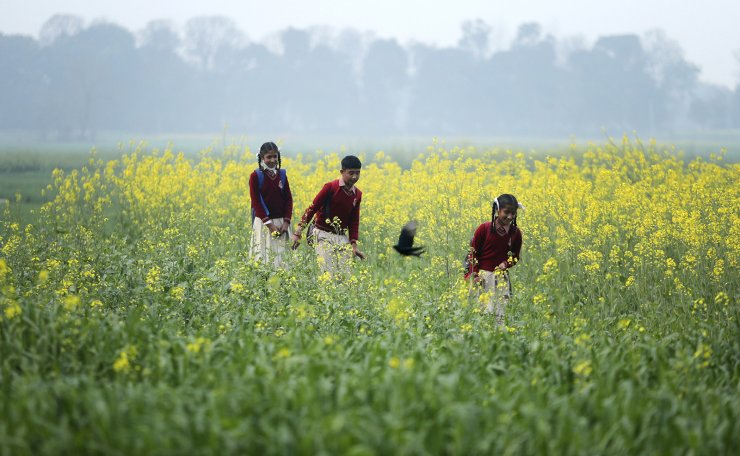 Indian children walk through a mustard field as they return from school in Kanachak village, on the outskirts of Jammu, India, Tuesday, Feb. 9, 2021. AP
