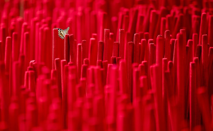 A butterfly is seen among incense sticks during its drying process at a home-industry factory, ahead of the Chinese Lunar New Year, in Tangerang, on the outskirts of Jakarta, Indonesia, February 10, 2021. REUTERS