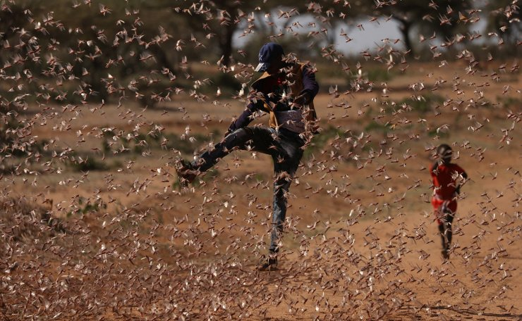 A man tries to chase away a swarm of desert locusts in Naiperere, near the town of Rumuruti, Kenya, January 30, 2021. REUTERS