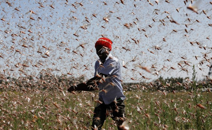 A man tries to chase away a swarm of desert locusts away from a farm, near the town of Rumuruti, Kenya, February 1, 2021. REUTERS