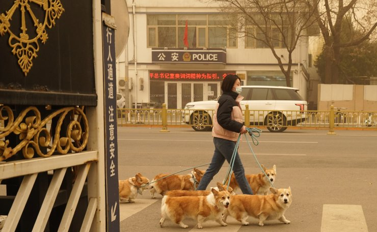 A woman walks her dogs during a sandstorm in Beijing, Monday, March 15, 2021. AP