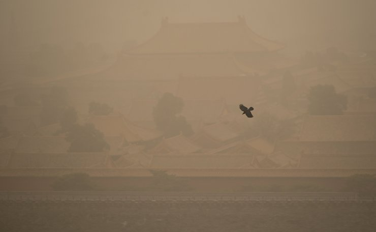 A crow flies over the Forbidden City during a sandstorm in Beijing on March 15, 2021. AFP