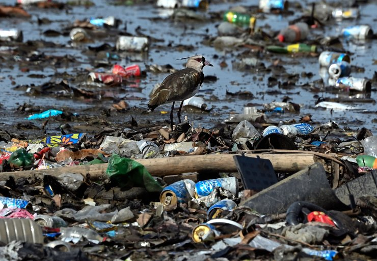 A bird walks amid garbage, including plastic waste, at the beach of Costa del Este, in Panama City, on April 19, 2021. AFP